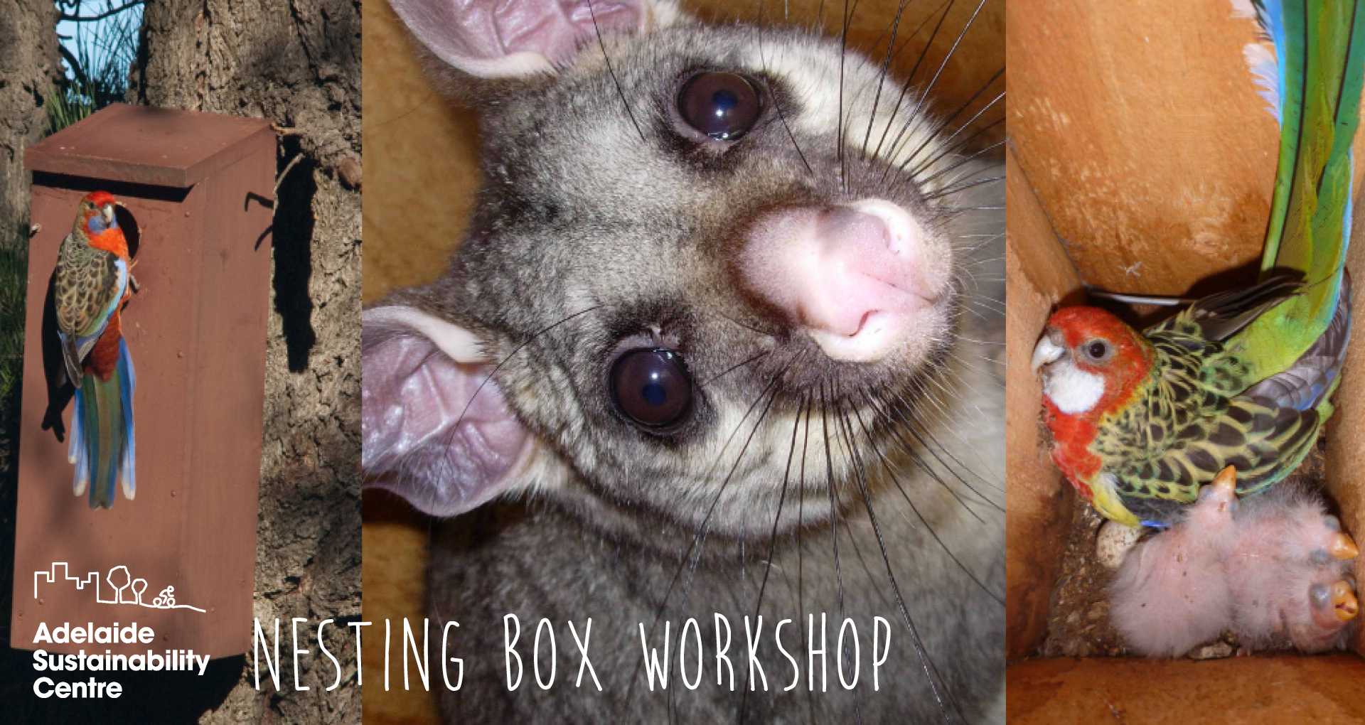 nestboxworkshop.png