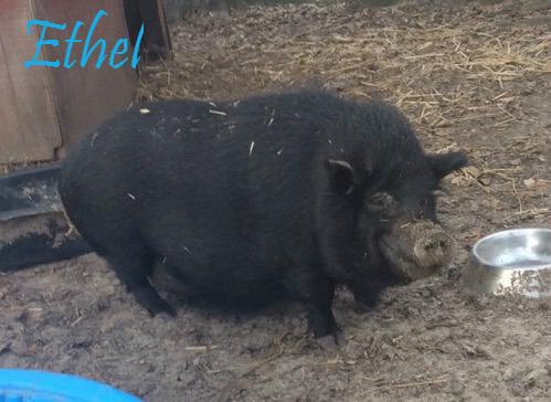 Ethel-New.jpg