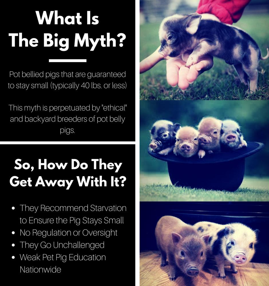 What_IsThe_Big_Myth-_(2).png