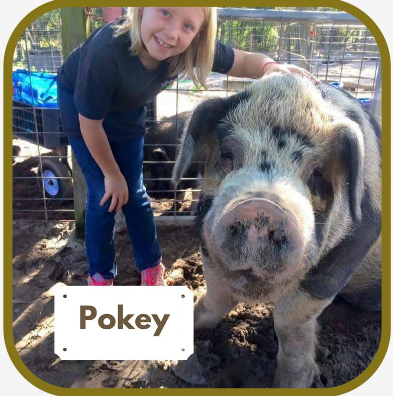 Pokey.1.png