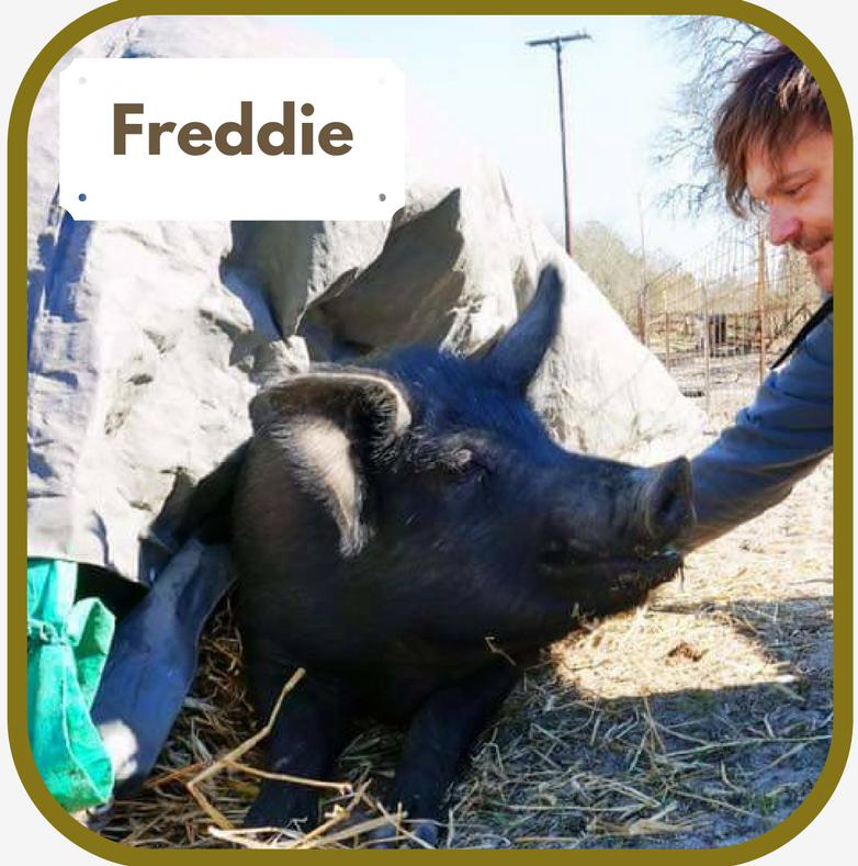 Freddie.1.png
