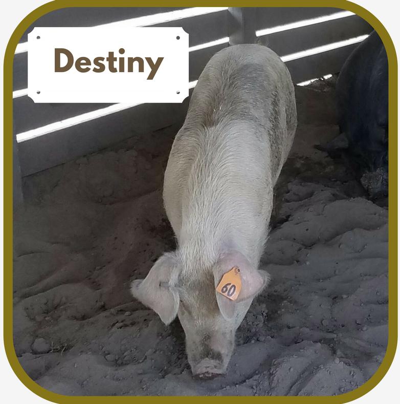 Destiny.1.png
