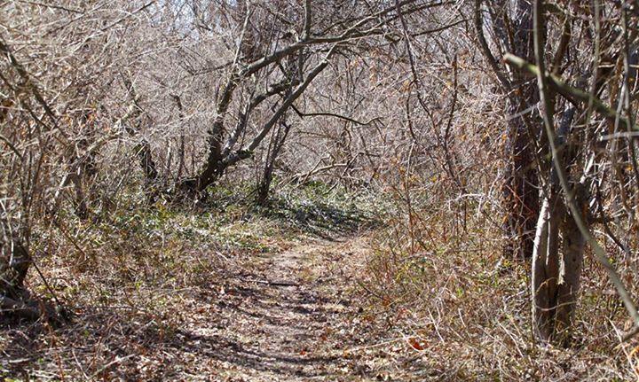 trails_15.jpg