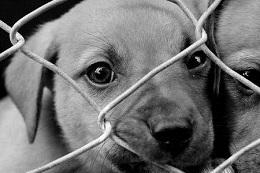Puppy_Mill.jpg