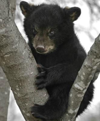 Bear_Cub.jpg