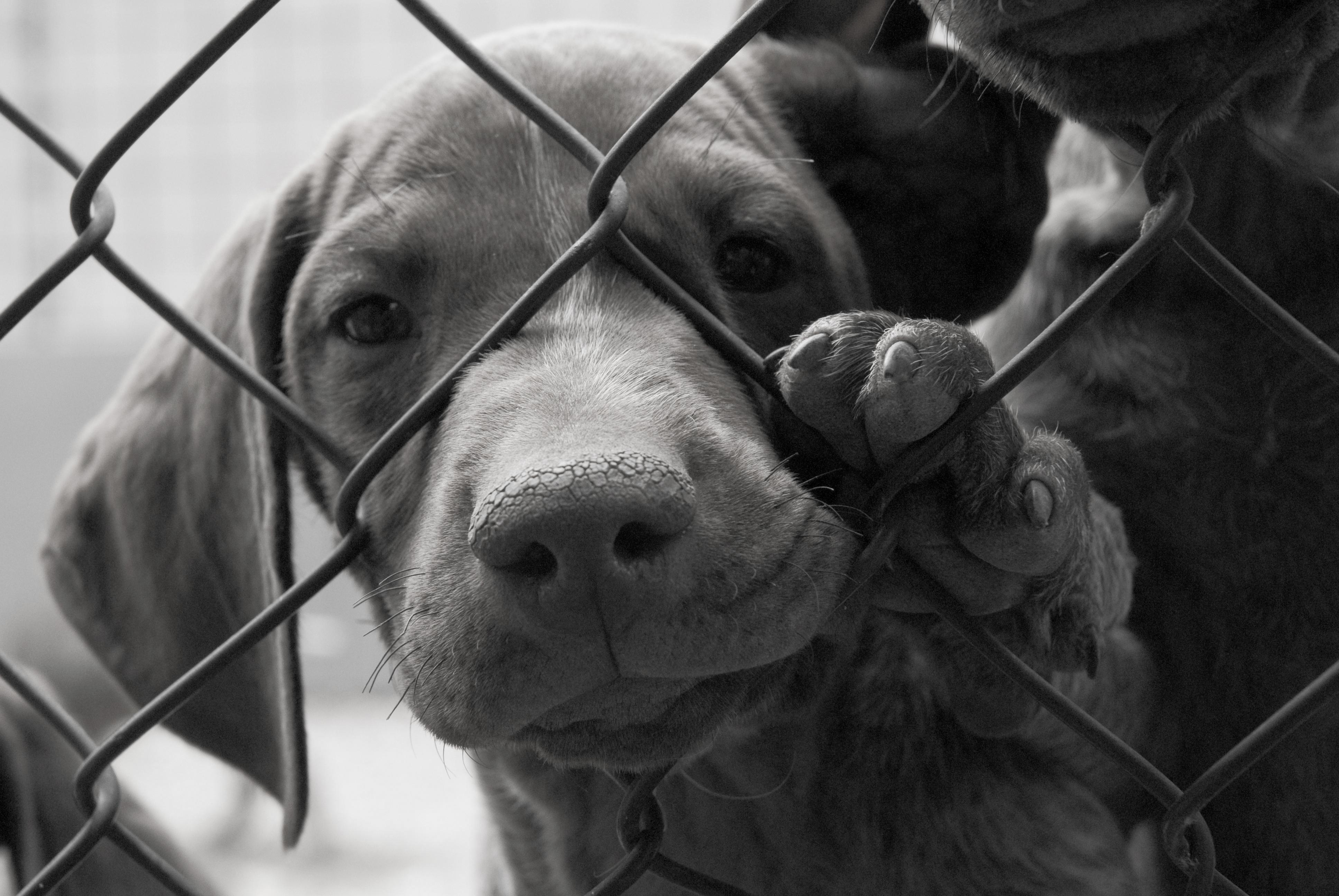 puppy_cage.jpg