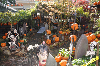 Steve Williams carved 406 pumpkins to decorate his West Vancouver yard.