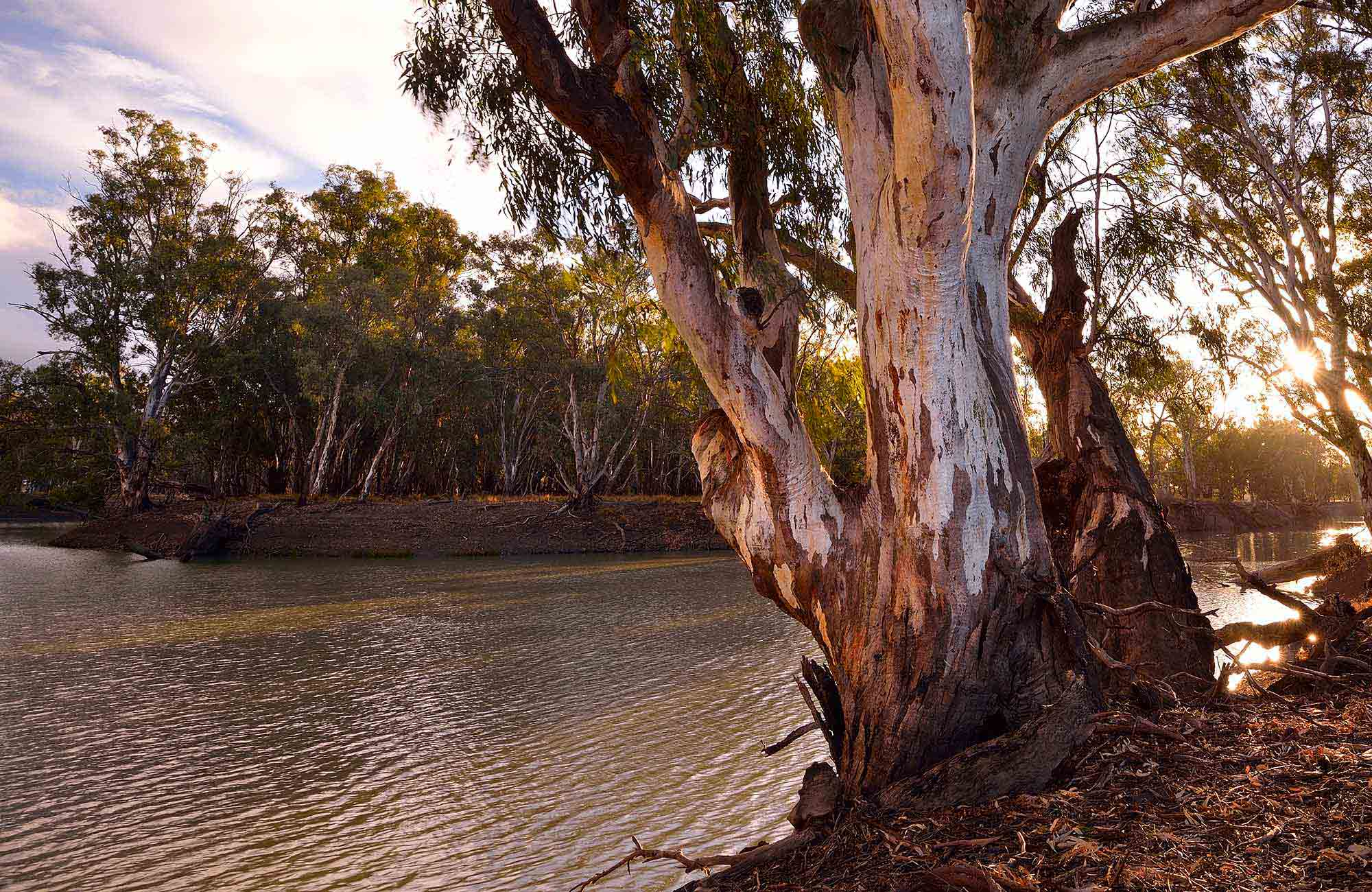 Greens condemn National Party attempts to revive River Red Gum logging industry - Dawn Walker MP