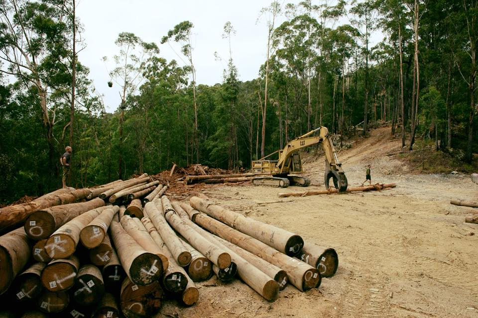 NSW Government to sacrifice forests with new logging rules - Dawn Walker MP