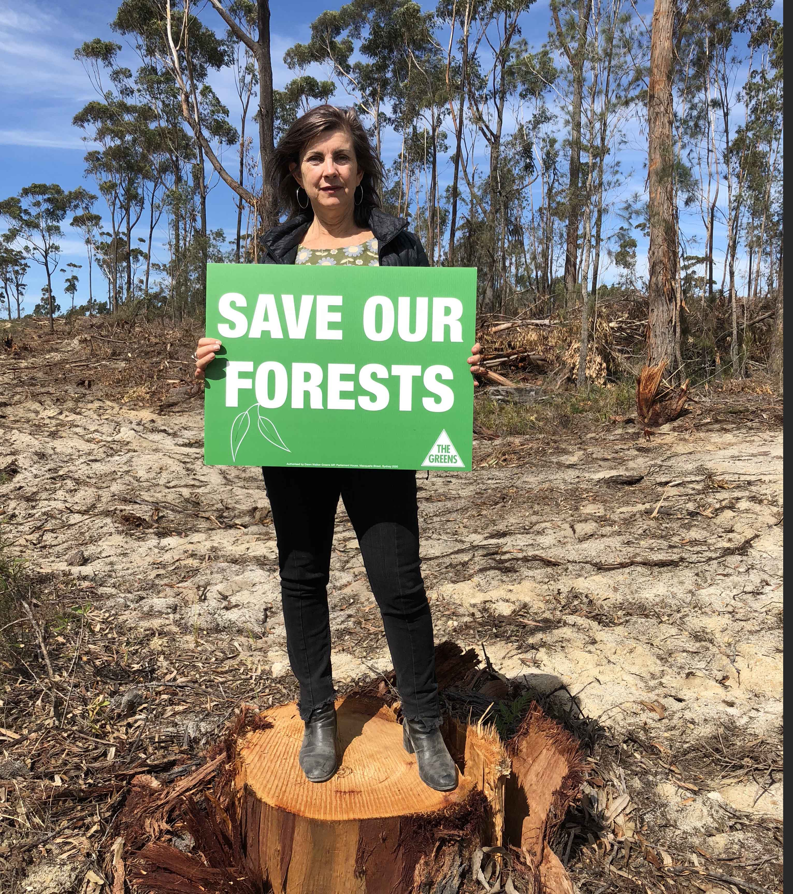 Greens uncover new figures and brand logging in Eden forests as 'economically reckless' - Dawn Walker MP