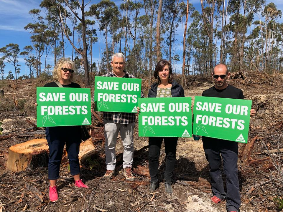 LNP sign off on 20 years of more forest destruction - Dawn Walker MP