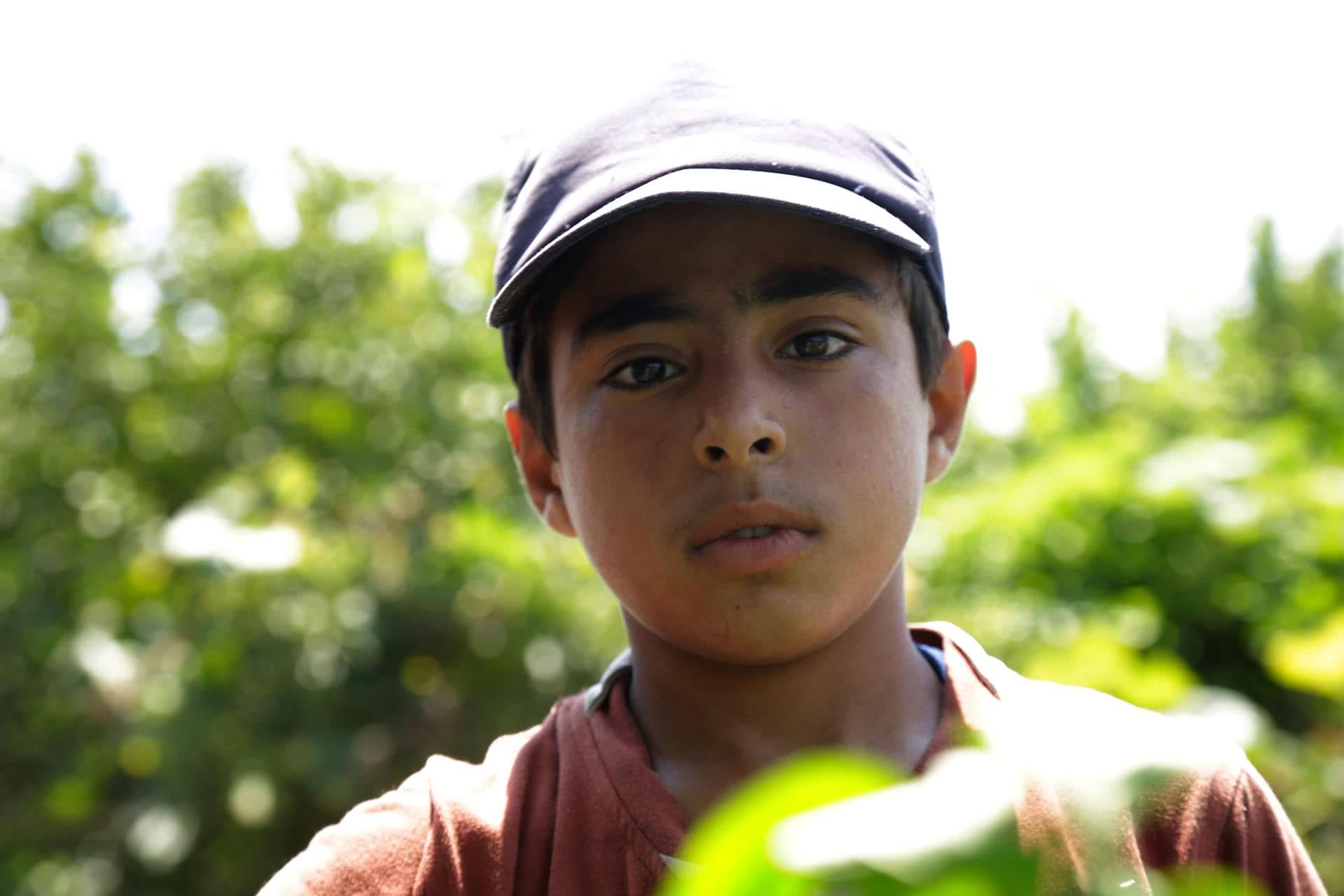 Ahmad Abu Samra, 13, works on his family's land to help provide food for his family. (Photo: DCIP / Saud Abu Ramadan)