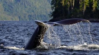 Whales_Tale.jpg