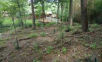 Woodland Restorations