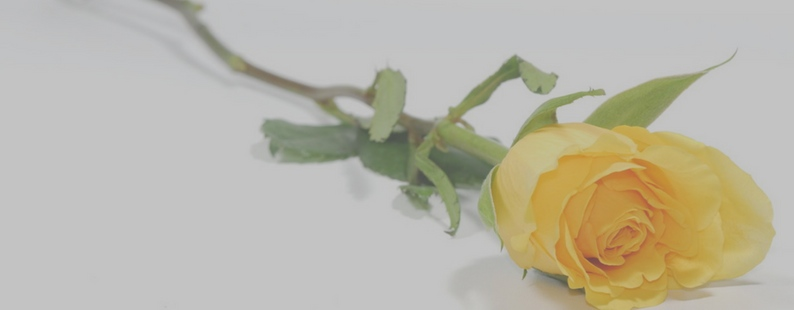 Equality_Day_Celebration_Yellow_Rose.jpg