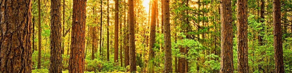 More Tree Grants