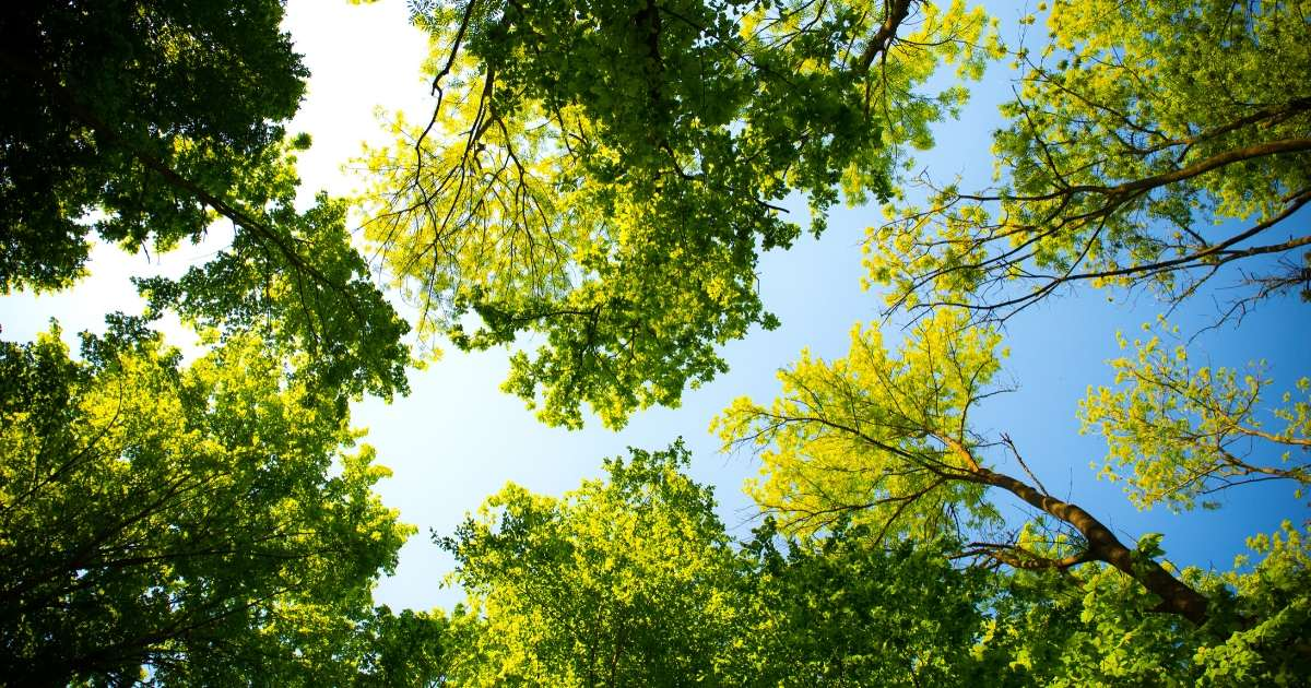 Look up into trees