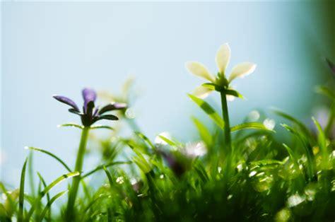 Fresh Spring Air