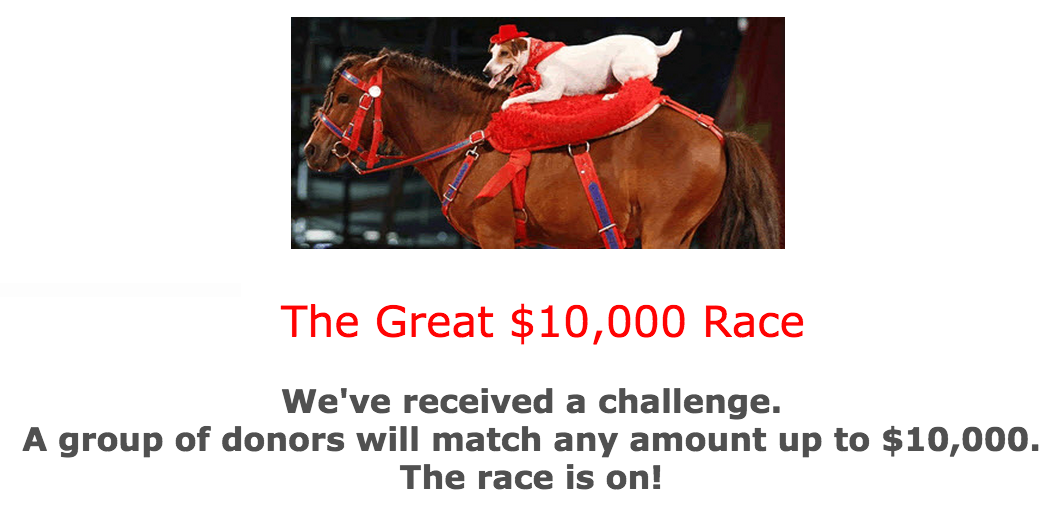 the_great_race_2014.png