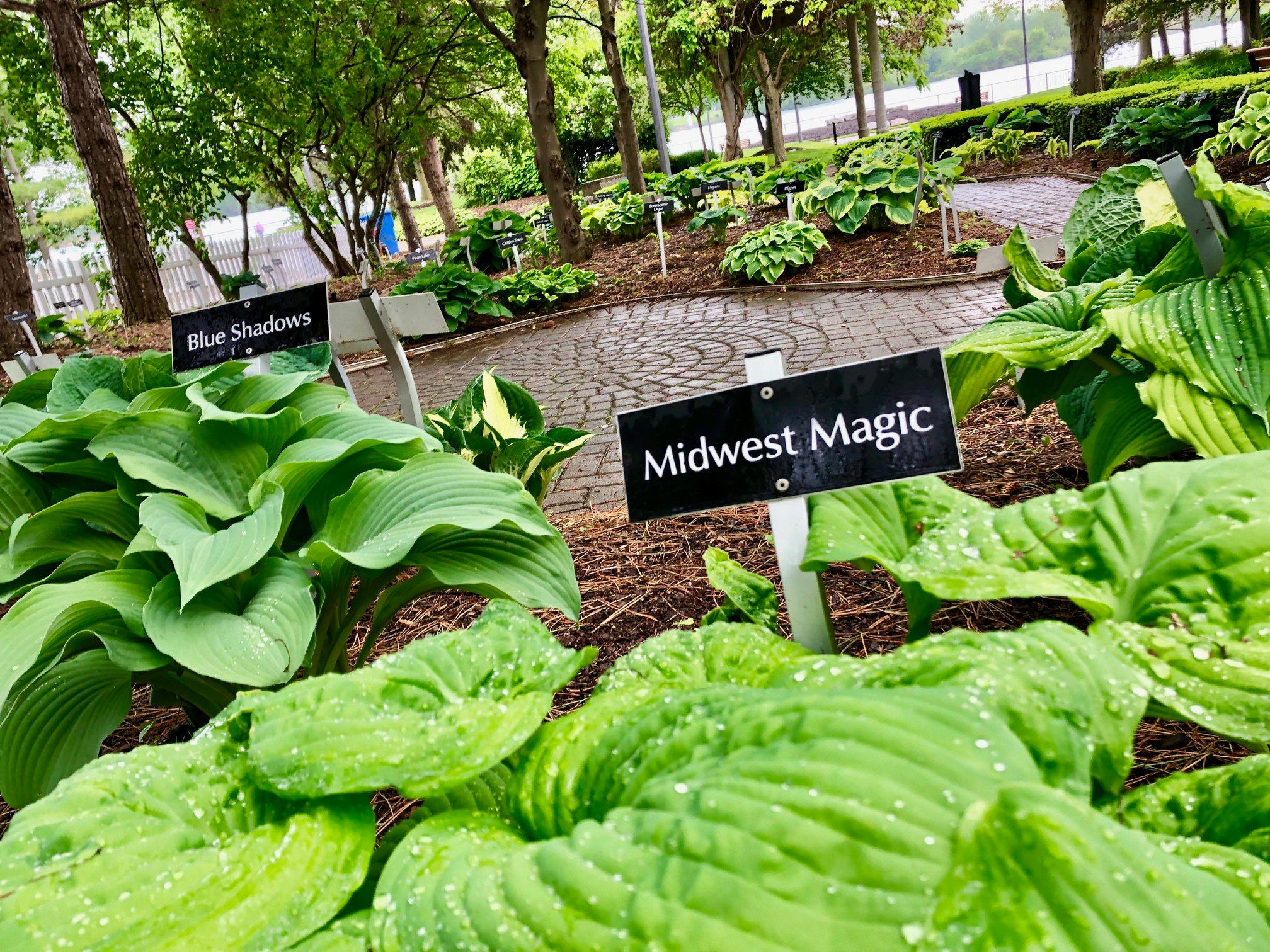 The Hosta Garden at King's Navy Yard Park