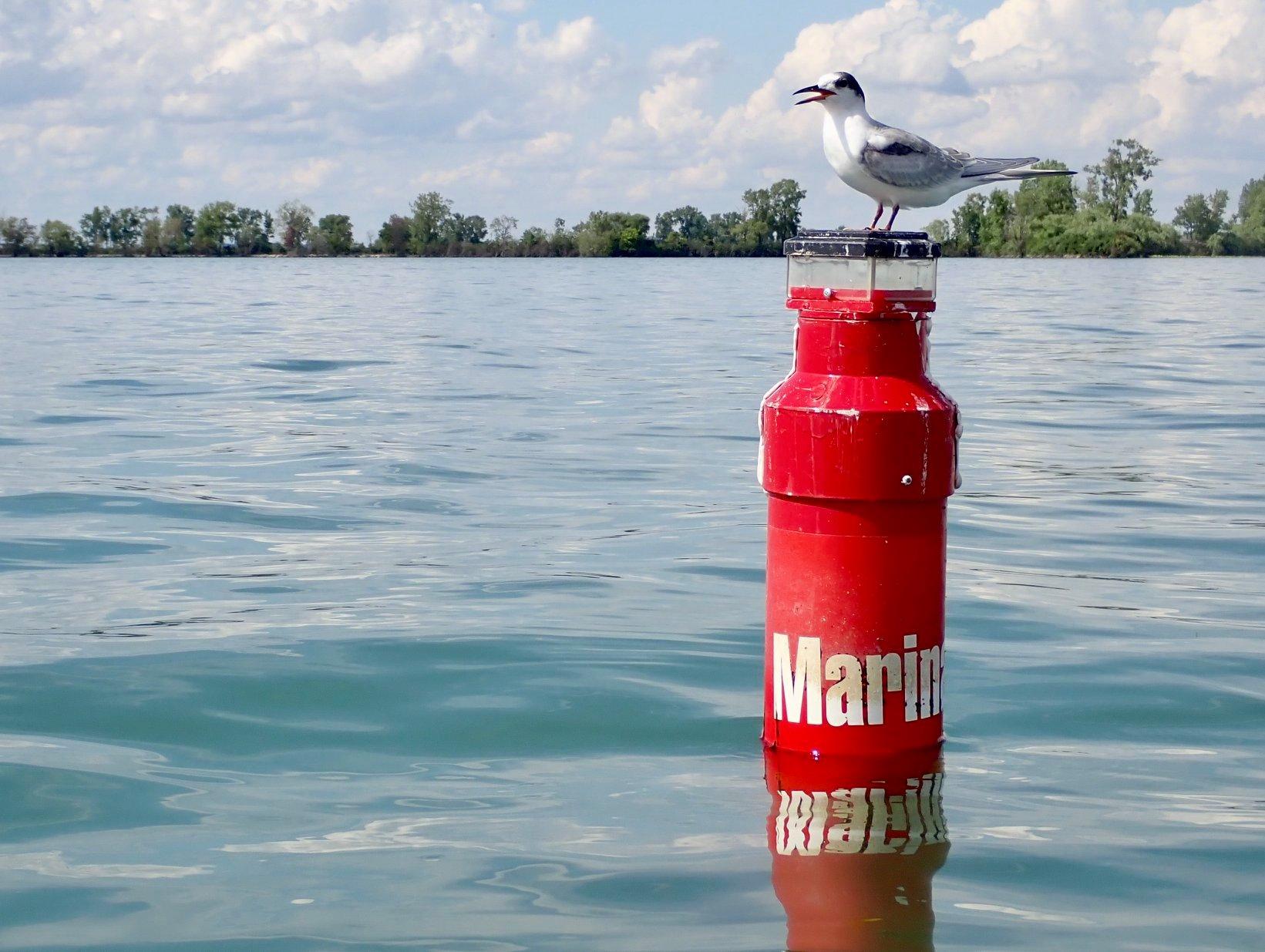 A marker in the Detroit River near Ranta Marina Park