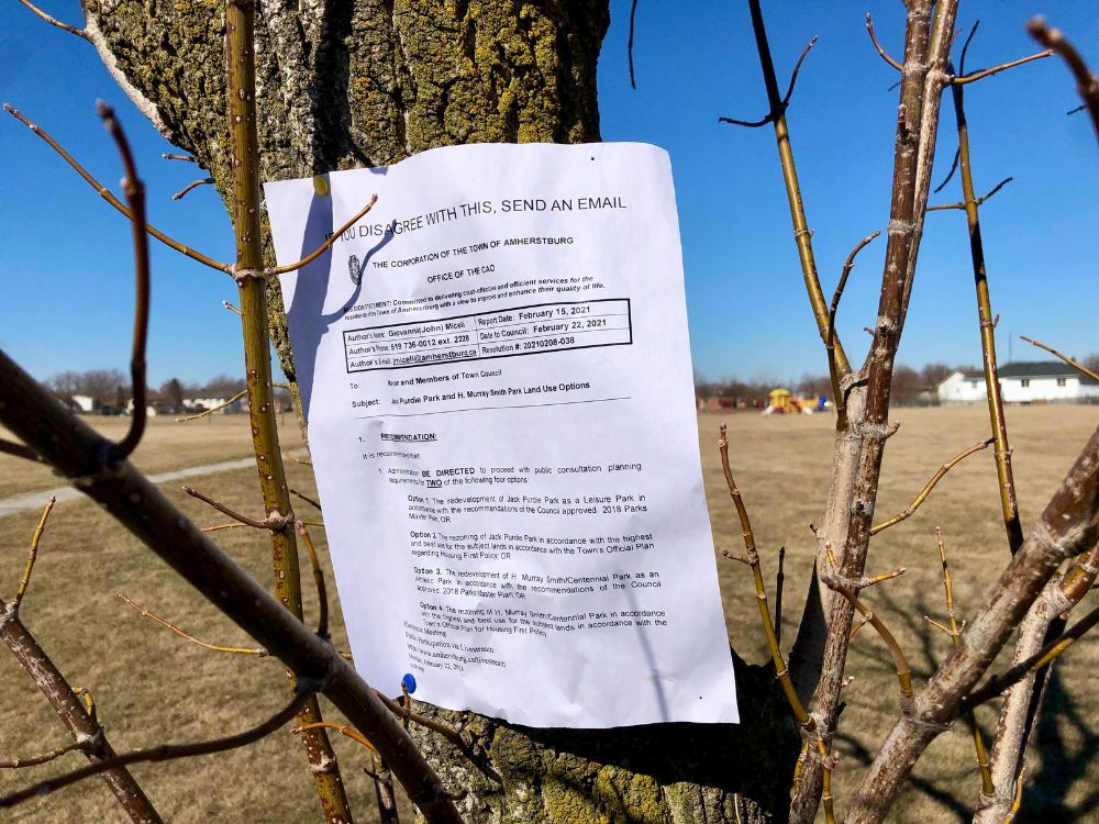 A council report in a tree at Jack Purdie Park