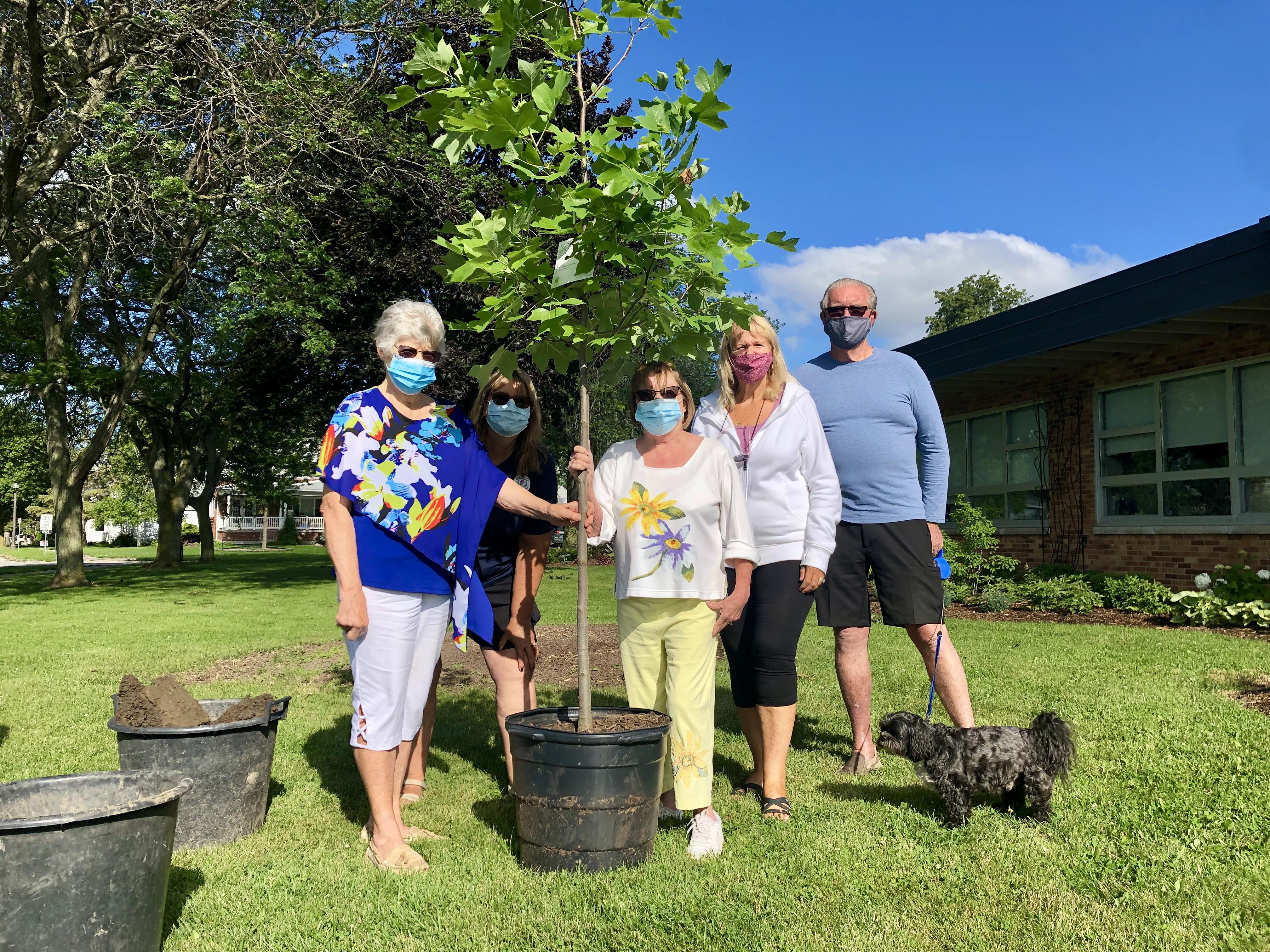 Members of the Amherstburg Fort Malden Horticultural Society plant a tulip tree at the hub