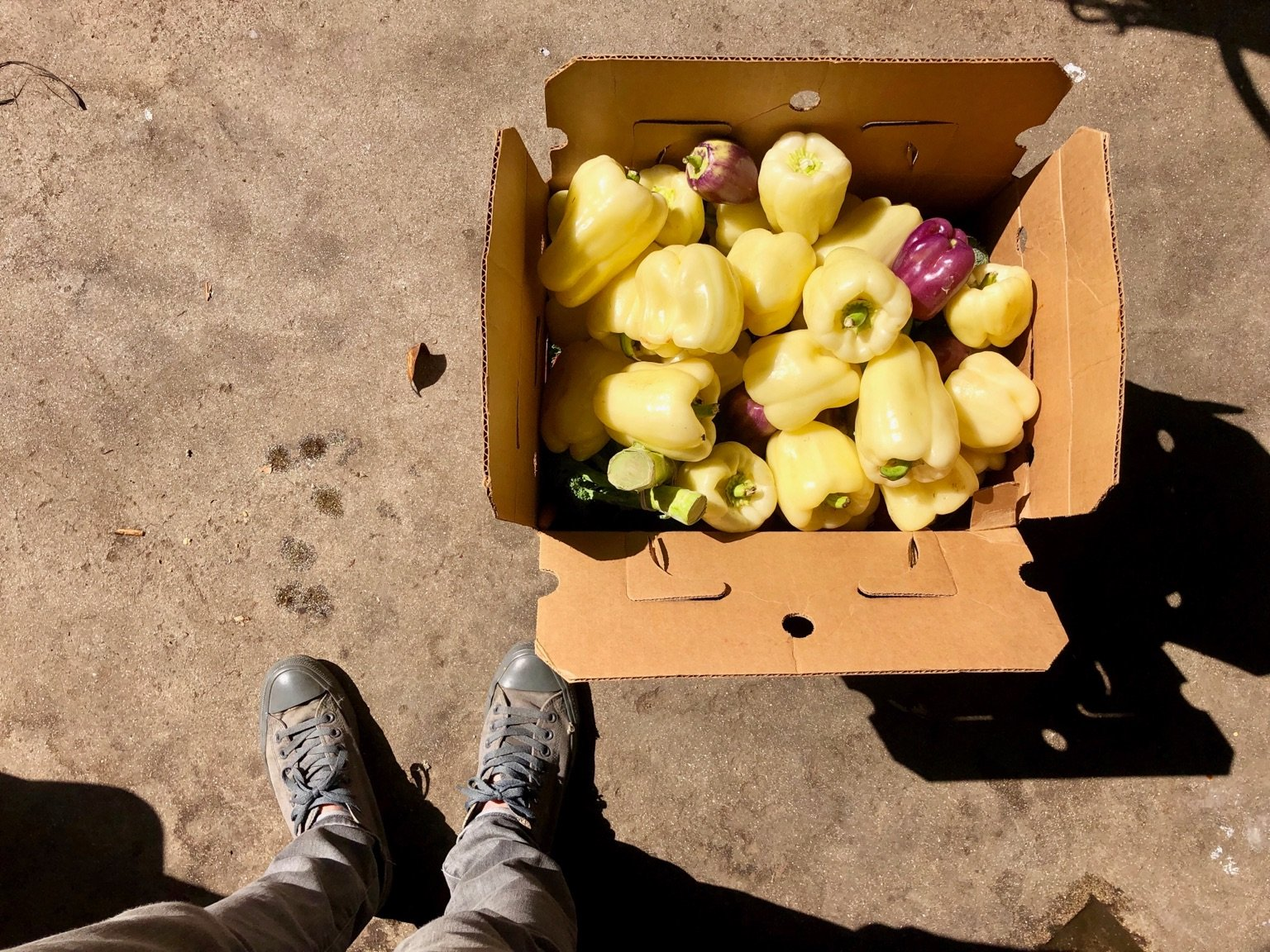 Food Not Bombs, box of peppers