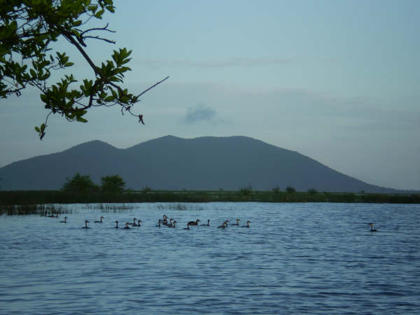 Wetland_Birds_in_Caley_Valley_in_Wet_Season.jpg