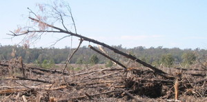 land_clearing_photo_small.jpg