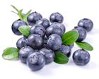 Wild Blueberry Country Fair in August