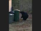 Locking Bears out of Green Bins