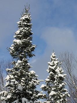 tree-sky2.JPG