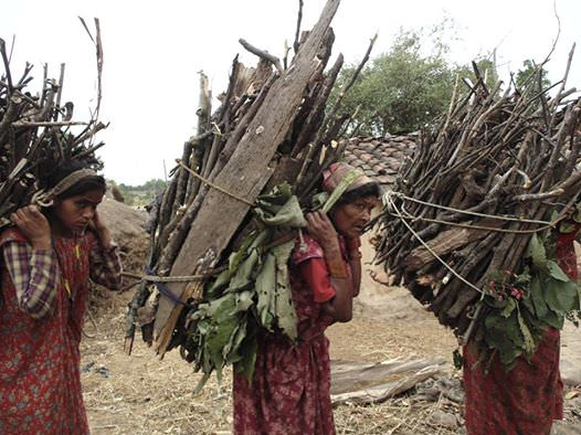 Nepal_firewood.jpg