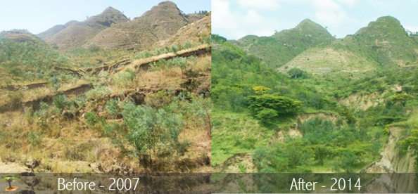 History – Eden Reforestation Projects