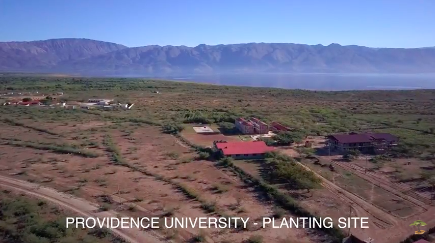 Providence University Planting Site