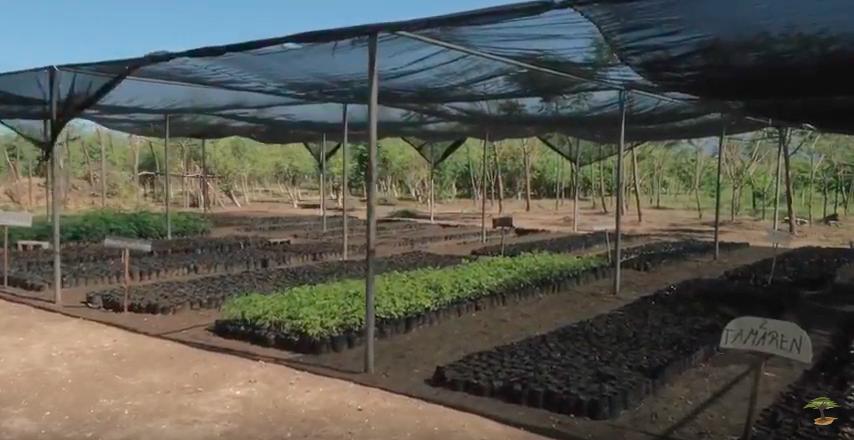 Haiti Planting Site