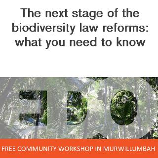 Murbah_Biodiversity_320.png