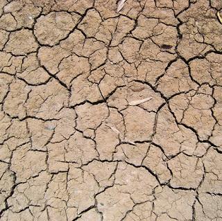 drybed320.jpg