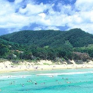 forest_coast320_sq.jpg