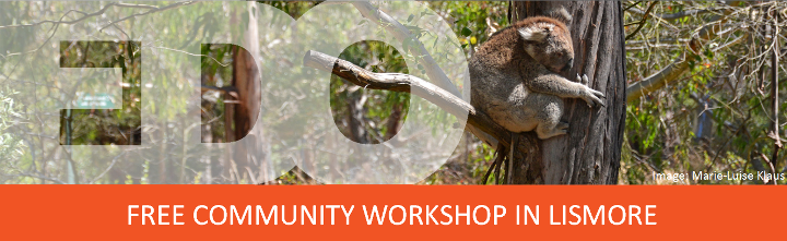 Community seminar on koalas