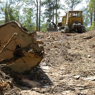 tree_stumps_320_sq.jpg