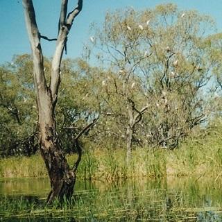 Water_-_wetland_Macquarie_marshes_source_Bev_Smiles320.jpg