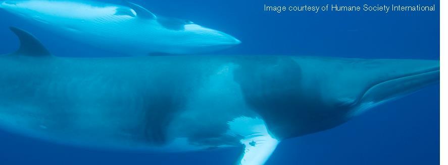 Whales_HSI.jpg