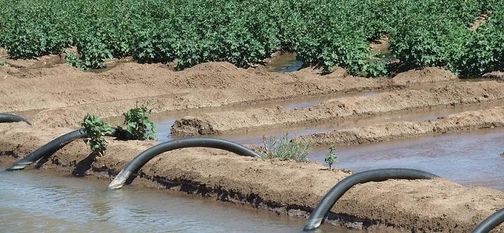 Channel_Irrigation_of_cotton_crops_WARREN_720.jpg