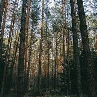 forestry_sq_320.jpg