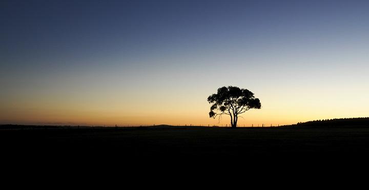 lone_tree_720.jpg