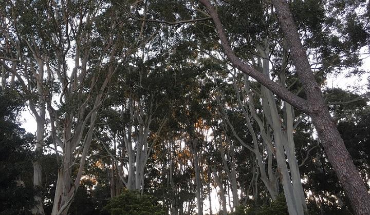 trees_720.jpg