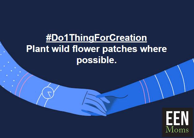 #Do1ThingForCreation - Plant flowers