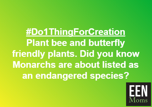 #Do1ThingForCreation - Protect Pollinators